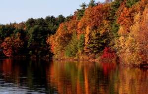 Walden Pond Autumn