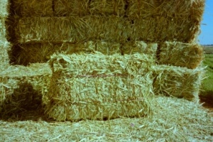 grass-hay-bale-animal-feeding-grass-hay